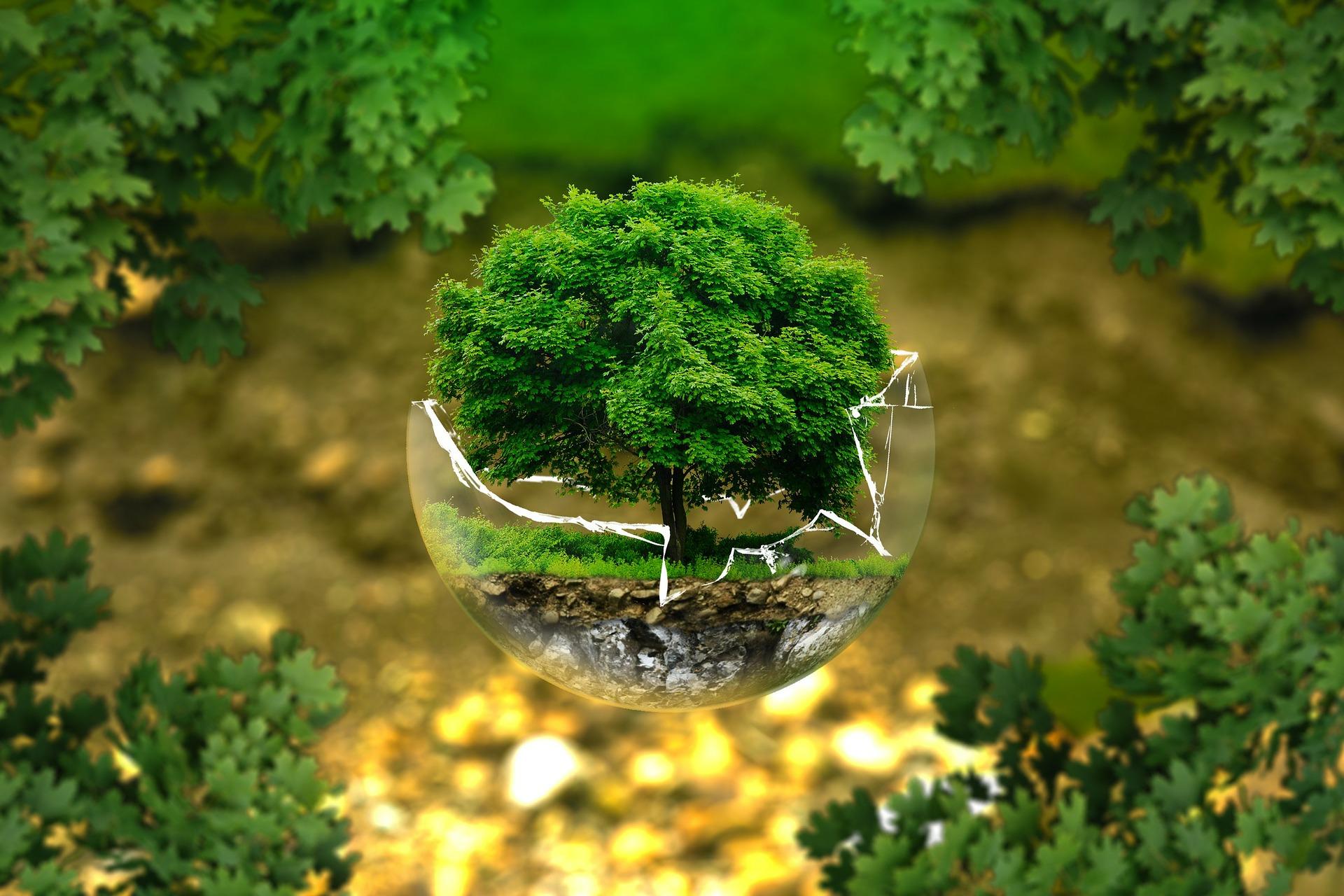 A növényvédelem alapjai course image